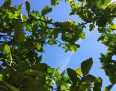 The many joys of fruit trees